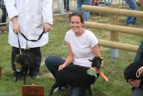 concours national 2013 du gemo mouton d'ouessant