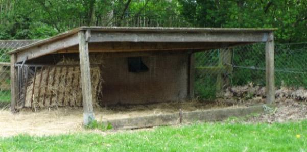 abri pour moutons d'ouessant de construction elaboree