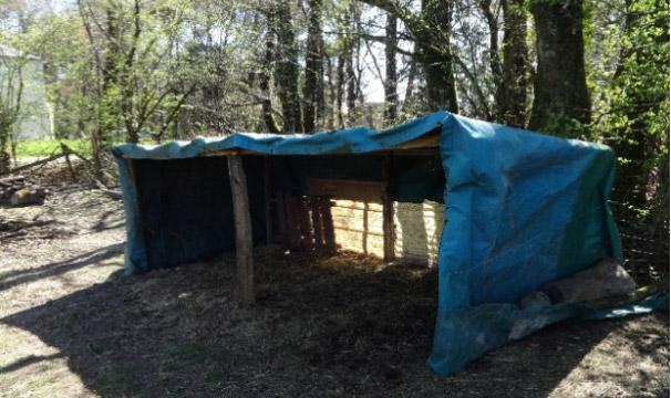 abri pour moutons d'ouessant de construction simple