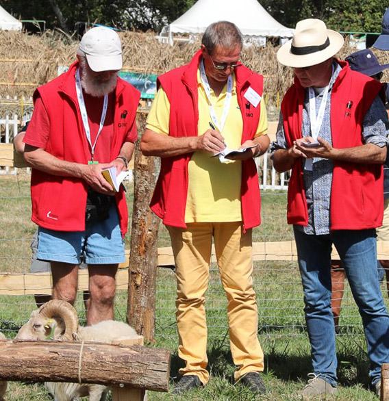 jury du concours national 2018 du mouton d'Ouessant